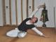 yoga maintal 37