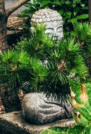 Buddha Yoga-Schule Bernewitz